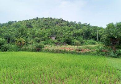বিশিন্দায় বিশ্রাম